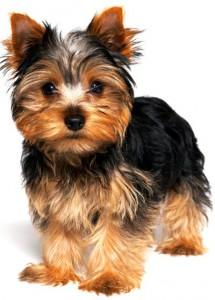 puppi_g